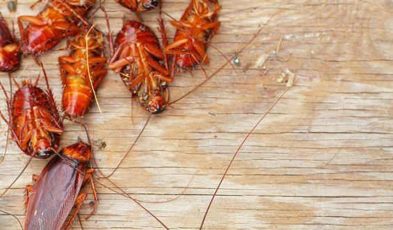 how to get roaches out of furniture couch and other hidden areas