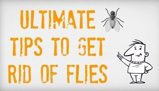 How to Get Rid of Flies in House Kitchen Yard