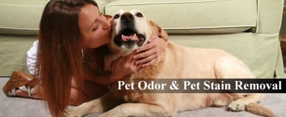 Homemade Solutions to Remove Pet Stains and Odor Removal from Carpet and Home