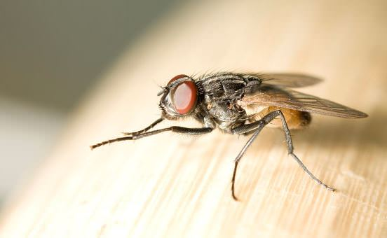 How to Get Rid of Flies at Home