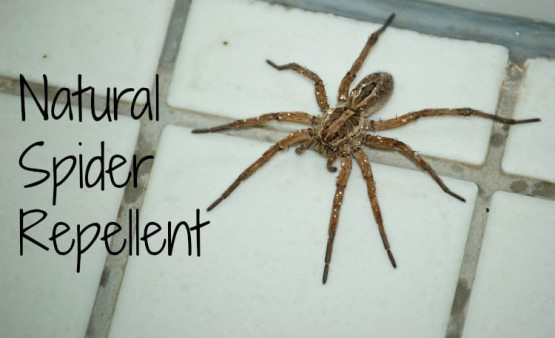 How to Make Spider Repellent at Home