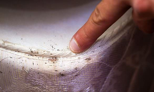 does baking soda kill bed bugs baking soda